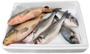 diabetes-fish