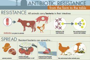 Resistência Antibiótica da Fazenda à Mesa.